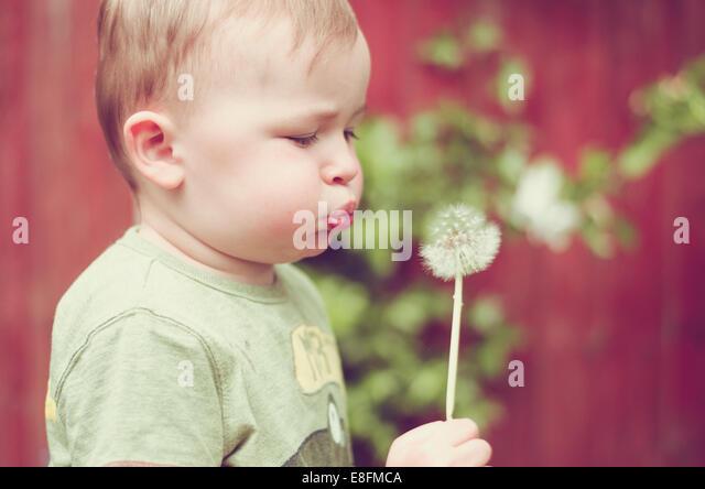Baby boy blowing dandelion clock - Stock Image