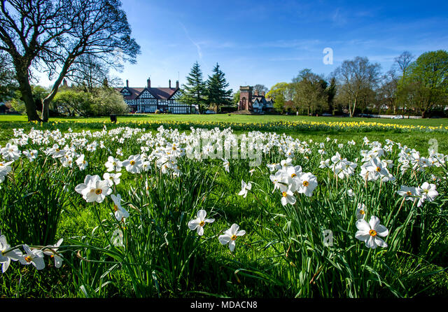 Worsley, Manchester. 19th Apr, 2018. UK Weather: Glorious sunshine in Worsley, Manchester on what is expected to be the hottest day of the year so far. Temperatures are expected to reach the mid 20's centigrade this afternoon and the hot spell is going to last until the weekend. Dog walkers enjoy a morning stroll amongst the daffodils on Worsley Green. Picture by Paul Heyes, Thursday April 19, 2018. Credit: Paul Heyes/Alamy Live News - Stock Image