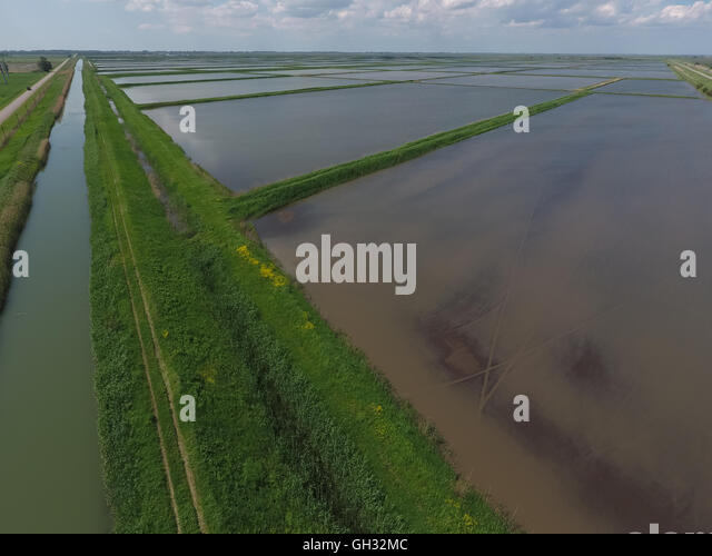 method of planting paddy Determination of heavy metals uptake in soil and paddy plants the method for accuracy and precision, certified standard reference materials for soil srm2711a (montana ii soil) and srm (strawberry leaf-1) for the rice plants were.