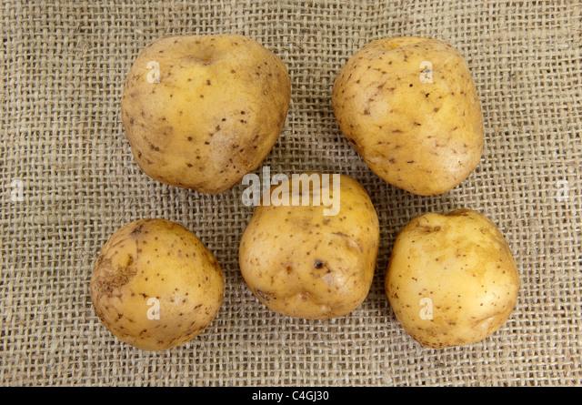 Potato (Solanum tuberosum La Bonnotte). Tubers on hessian. - Stock Image
