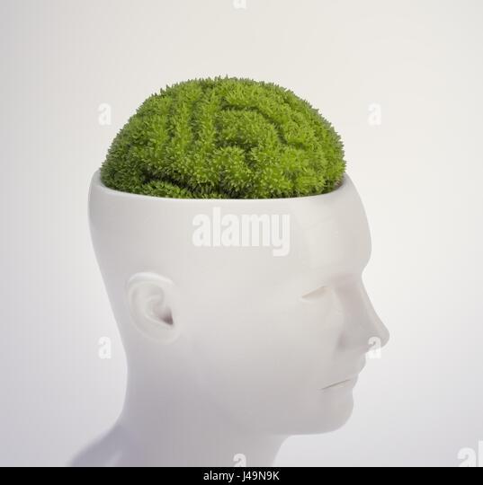 Plant shaped like a human brain - intelligence and memory concept 3D illustration - Stock-Bilder