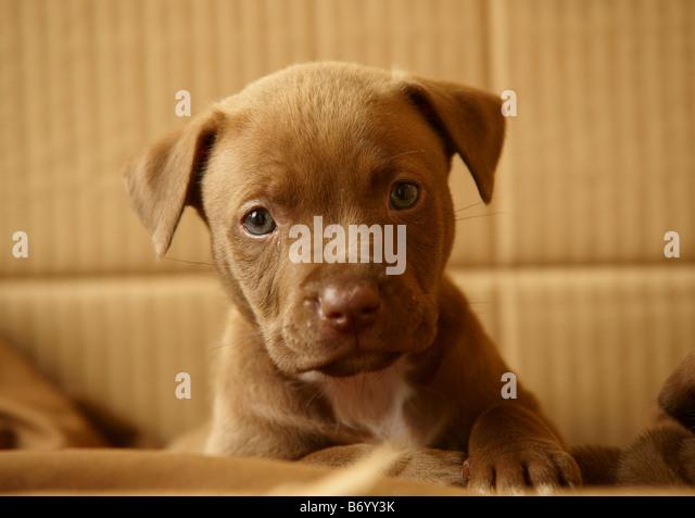 puppy - Stock Image