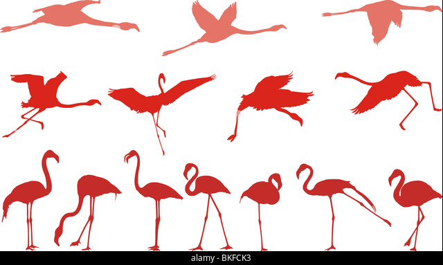 Filed vector illustrations of birds, pink flamingos - Stock Image