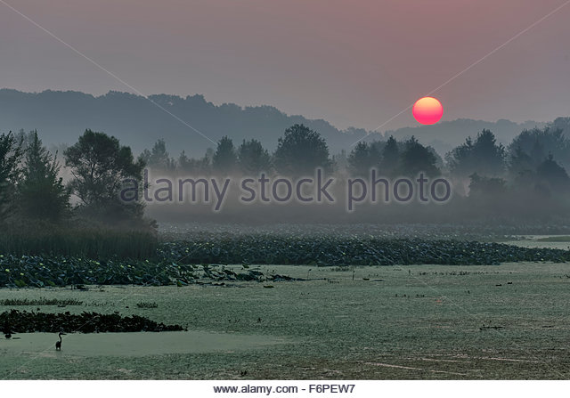 Sunrise over marsh in southern Indiana - Stock Image