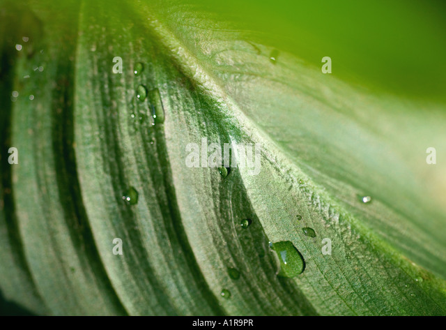 Leaf, extreme close-up - Stock Image