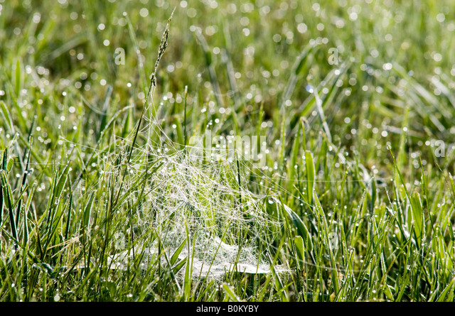 Morning dew on spider's web, France. - Stock Image