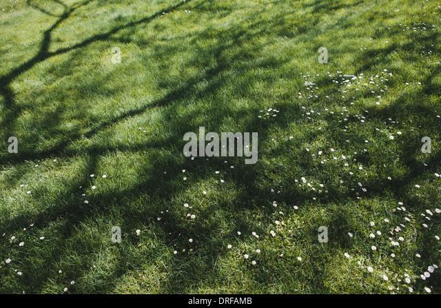 Washington state USA Lush green grass of lawn providing cool shade - Stock-Bilder