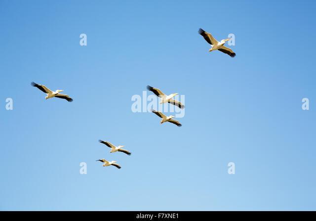 Djoudj National Bird Sanctuary, Saint Louis, in Senegal with 400 species of birds. - Stock Image