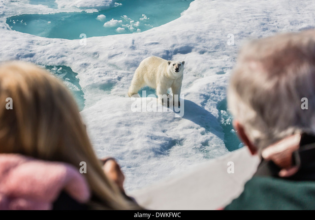 Guests from the Lindblad Expedition ship with polar bear (Ursus maritimus), Cumberland Peninsula, Baffin Island, - Stock-Bilder