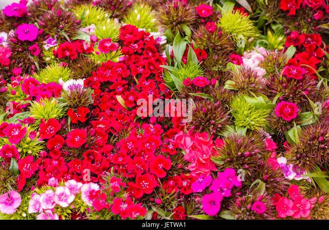 image Flower seller for euro