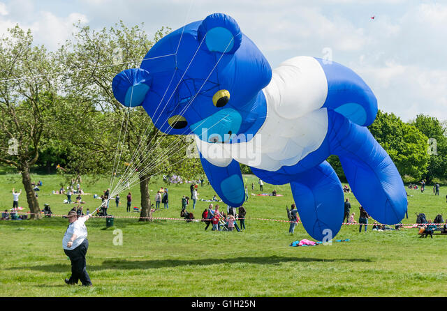London, UK.  15 May 2016.  A huge teddy bear tries to get off the ground.  Hundreds of kite flying fans enjoy the - Stock Image
