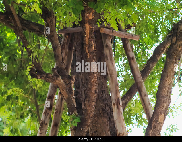 Wooden poles supporting a tree - Stock Image