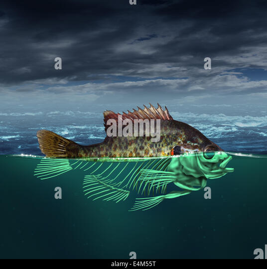 Water pollution and polluted ocean concept as a fish with half of the body underwater as a skeleton  for environmental - Stock Image