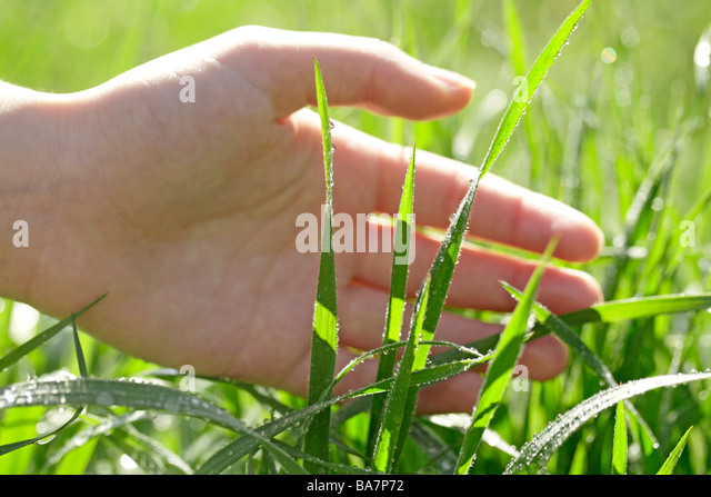 Grass and hand - Stock Image