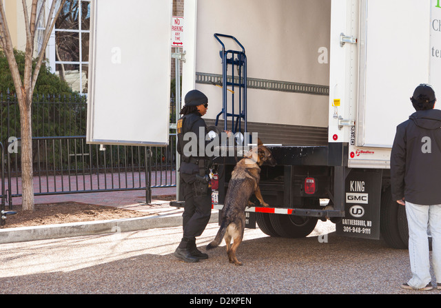 Bomb sniffing dog working at the back of a truck - Washington, DC USA - Stock Image