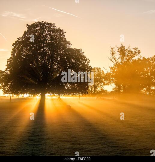 Sunlight streaming through trees in park at sunset, Berkshire, England, UK - Stock Image