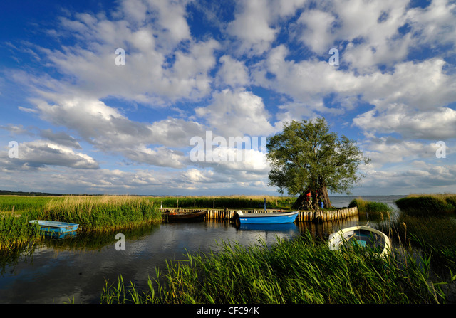 Coast area and estuary with fisching boats, Zempin, Achterwasser, Usedom, Mecklenburg-Western Pomerania, Germany, - Stock Image