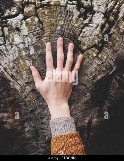 Man's hand on cross section of driftwood log from gigantic old tree - Stock Image