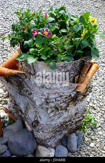 Flowers in a planter stock photos flowers in a planter stock images alamy - Flowers that grow on tree trunks ...