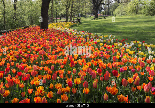 Pralormo castle, flourishing tulips in April for the event 'Messer Tulipano',Piedmont,Italy,Europe - Stock Image
