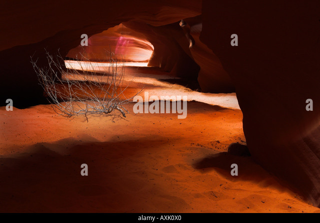 desert plant ground rock dirt low narrow round tunnel walls hole light shadow adventure sticks sand brown - Stock Image