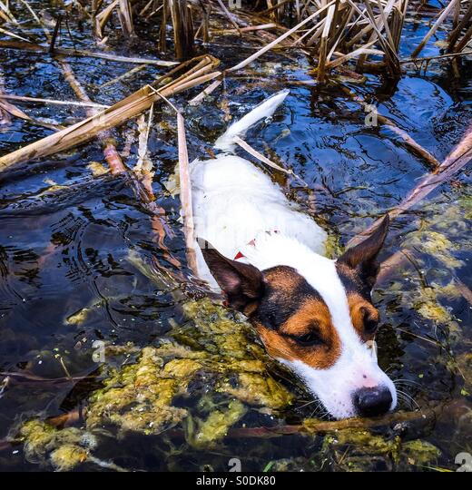 Russell pond stock photos russell pond stock images alamy for Koi pool thornton