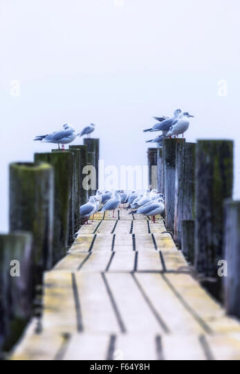 seagulls on a wooden jetty - Stock Image