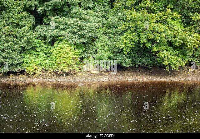 Trees along a the river lennon in Ramelton in Co. Donegal, Ireland - Stock Image