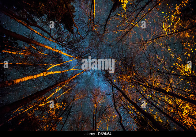 Low angle view of trees at night - Stock Image