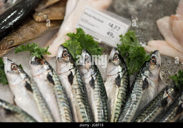 Fresh fish display stock photos fresh fish display stock for Fresh fish store
