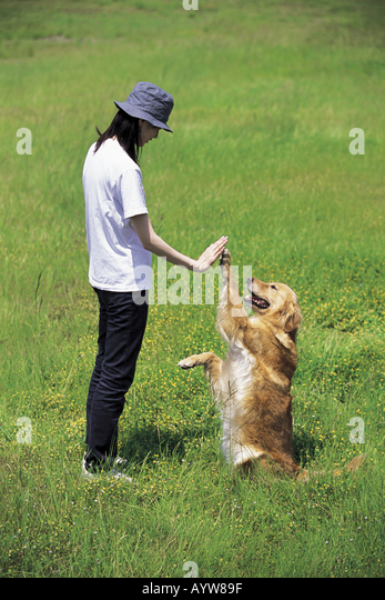 Woman shaking hands with a dog in the meadow - Stock-Bilder