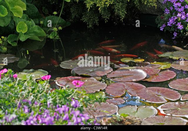 Small Garden Pond Stock Photos Small Garden Pond Stock