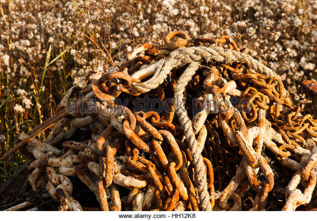 Autumnal, seafaring scene, rusty chain and rope against autumnal flowering - Stock Image