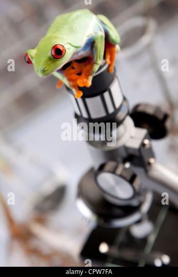Plants in laboratory - Stock Image