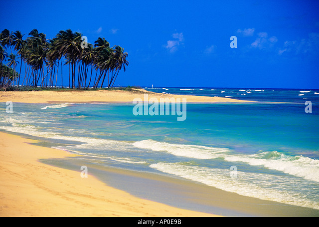 Tropical Waves Breaking On White Sand Beach Under A Crisp Blue Sky With Lush Green palm Trees in Punta Cana Dominican - Stock Image