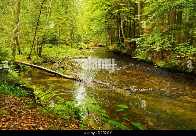 Grosser Regen (river), near Bayerisch Eisenstein, Bavarian Forest, Bavaria, Germany, Europe - Stock-Bilder