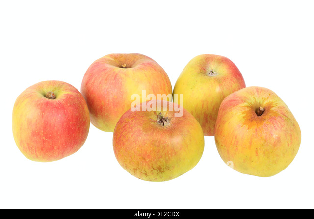 Apples, Anhalter variety, traditional sort for producing cider - Stock Image