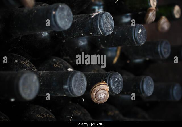 SnailWine6380   - Stock Image