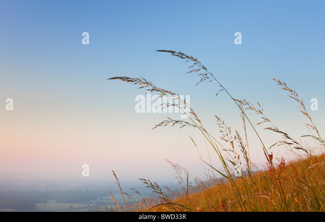 Detail of grass at sunset; South Downs; England, Great Britain - Stock-Bilder
