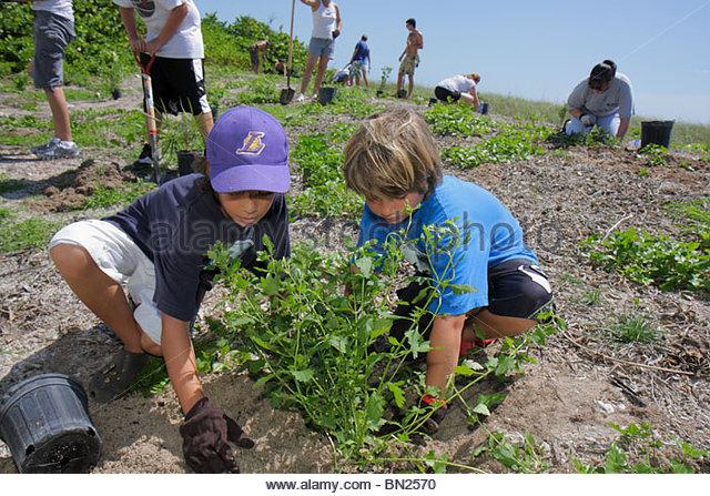Miami Beach Florida Beach View Park Surfrider Foundation Coastal Dune Restoration planting volunteer student boy - Stock Image