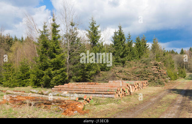 tree logs piled up near the road - Stock Image