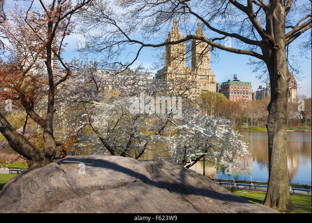 Central Park Lake with blooming Yoshino Cherry Trees in Spring, Manhattan Upper West Side, New Tork City - Stock Image