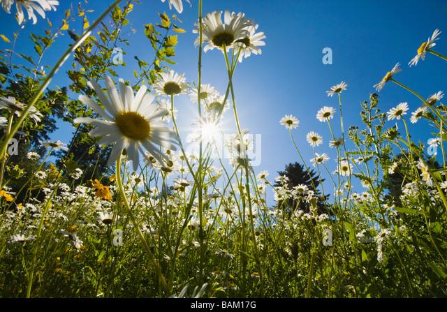 Flowers in sunlight - Stock Image