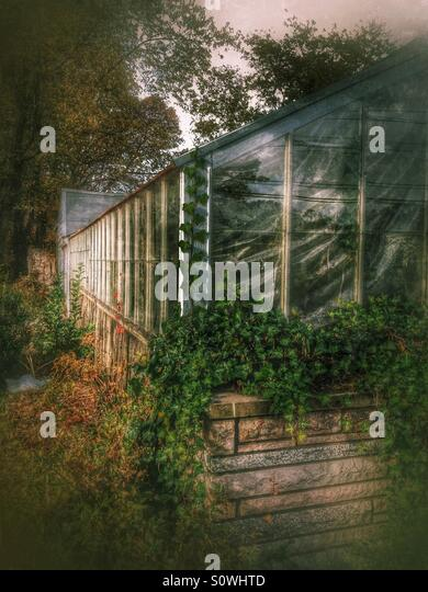 Abandoned Greenhouse Covered in Ivy - Stock Image