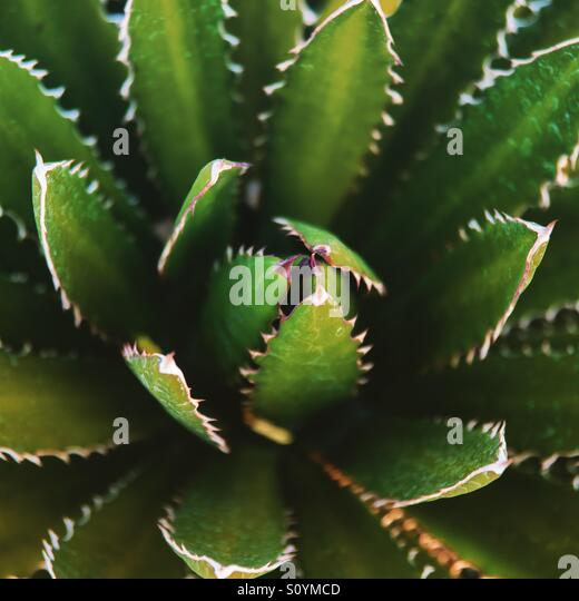 Cactus in New Mexico - Stock Image