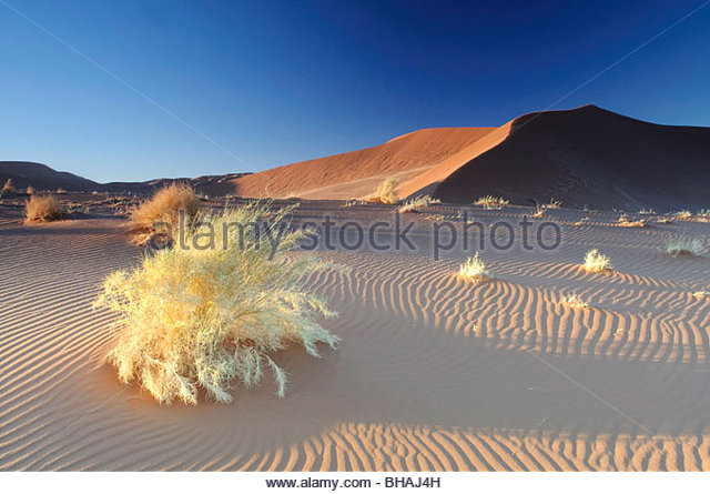 Red sanddunes in the Sossusvlei in the Namib just after sunrise - Stock Image