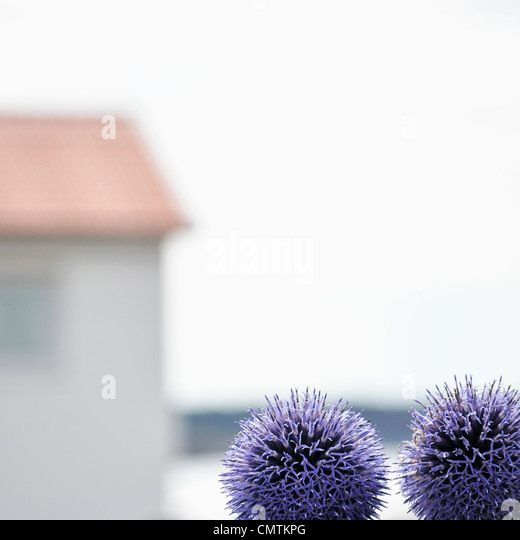 Close-up of flowers outdoors - Stock Image