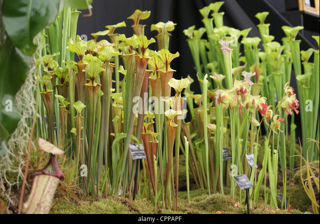 Chelsea flower show 2012 stock photos chelsea flower - Royal flower show ...