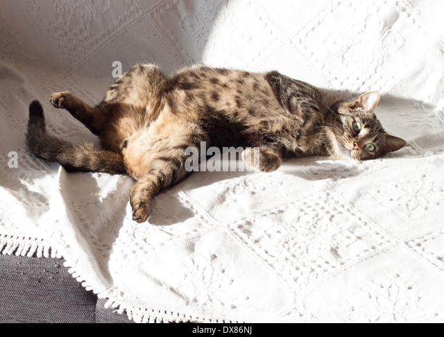 A cat on the sun - Stock Image