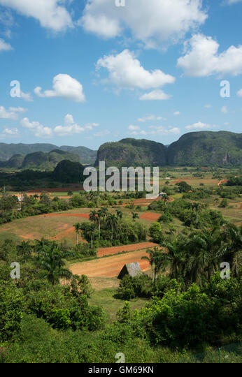 A thatched tobacco drying house in the Valle de Vinales in Cuba with jungle covered mogotes in the background - Stock Image